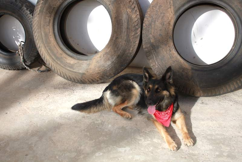 Roxy relaxing by some tires.